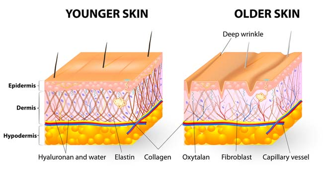Check Out the Ways to Prevent Skin Aging